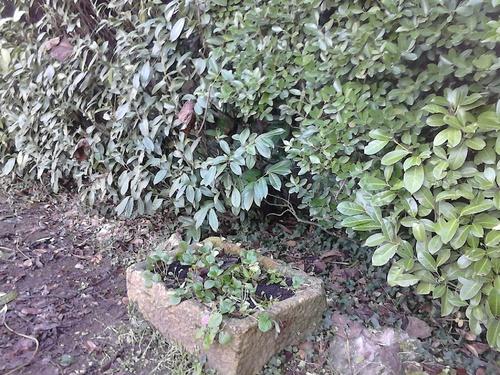 Les premières jardinières