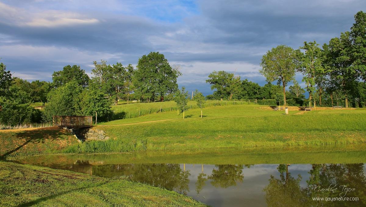 Mon étang