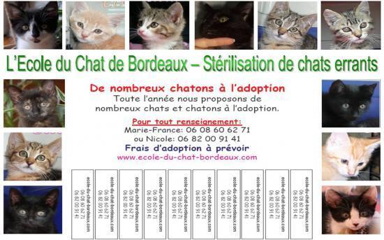Distribution D Affiches Adoption De Chatons Le Blog De L Ecole Du Chat Libre De Bordeaux
