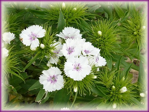 fleurs-vacances--3-.jpg