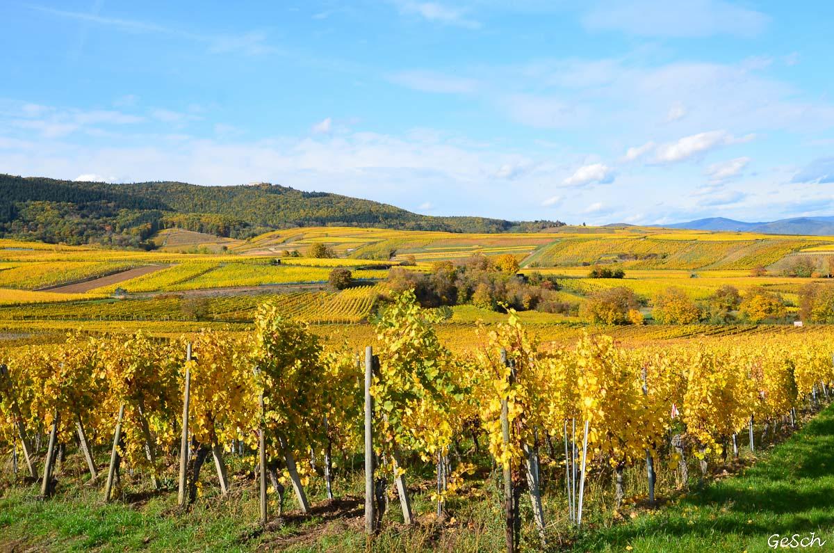 vignoble alsace automne haut rhin