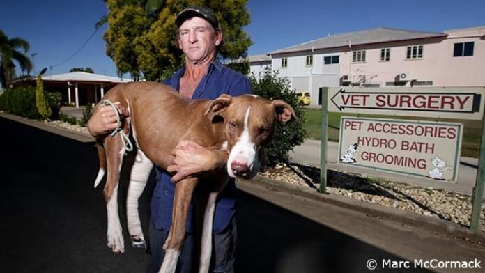 homme porte son chien sur 60 km durant 2 jours pour lui sauver la vie