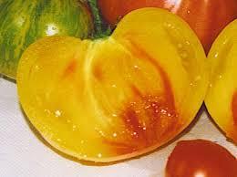 Plantations des tomates !!!