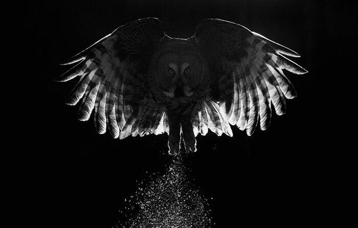 Les Gagnants du Concours des plus belles Photographies d'Oiseaux 2017
