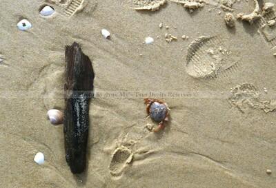 Photos d'une plage landaise les 5 et 8 Mars 2018