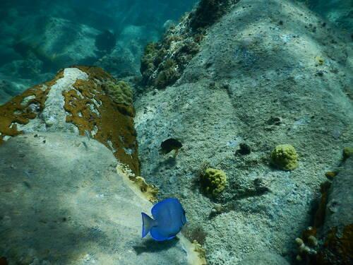 Les saintes photo sous marine
