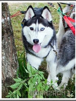 Mishka (2,5 ans)