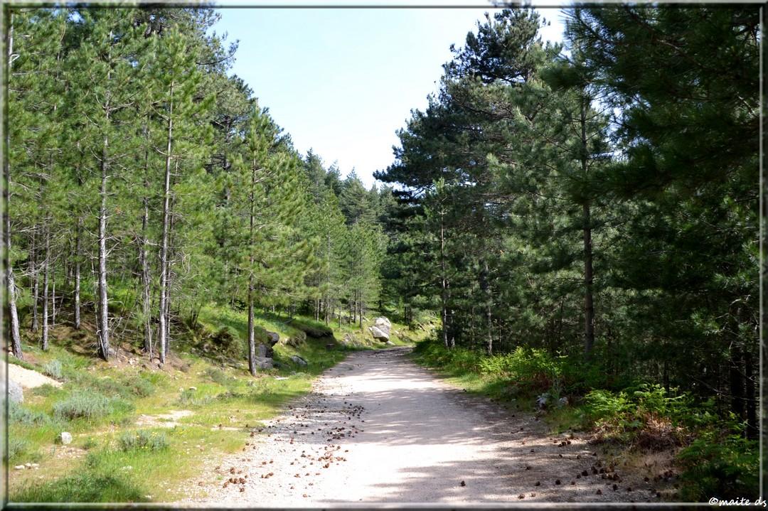 Col et sentiers de Bavella - Corse