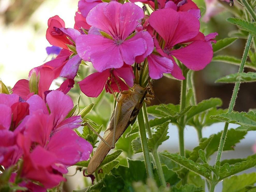 Insecte-01.jpg