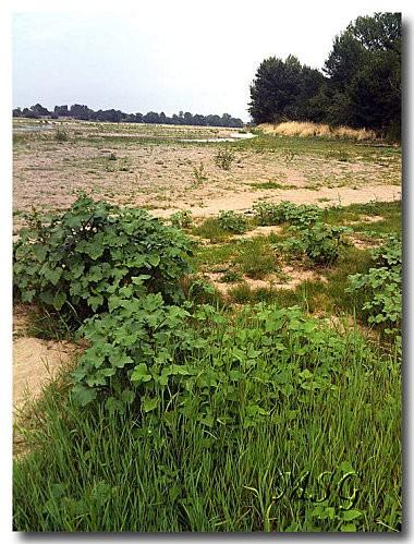 Prairie Loire 1