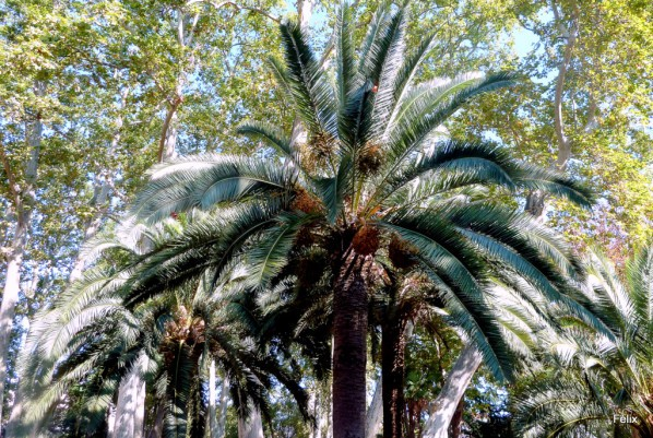 o05---Palmiers.JPG