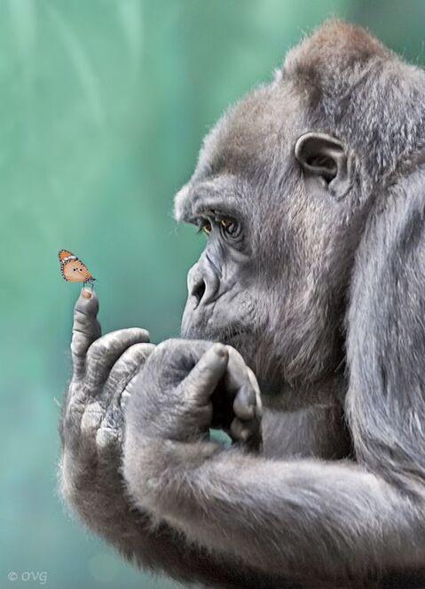 IMAGE : Le penseur