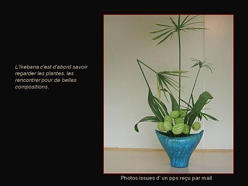 ikebana pps (16)
