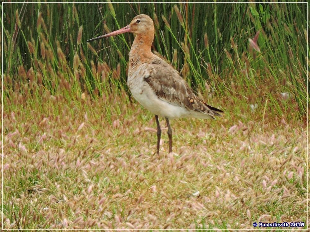 Réserve ornitho du Teich - Mai 2015 - 2/10