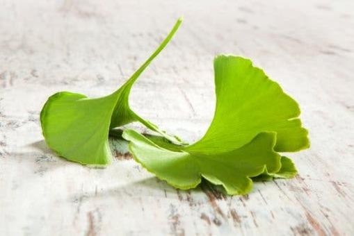 Le gingko biloba contre les douleurs émanant de l'inflammation du nerf sciatique