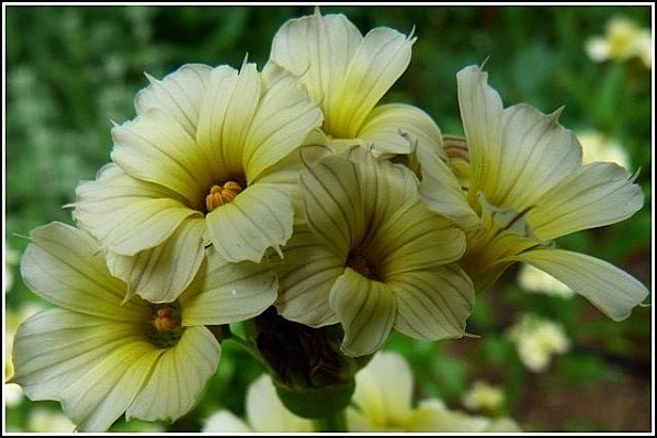fleur-jaune-macro1.jpg