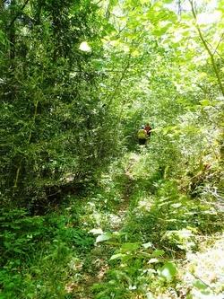 Des ruisseaux du Bourg.