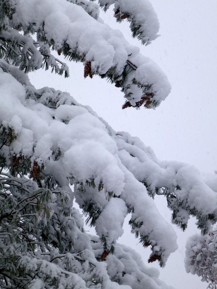 Tombe la neige....