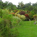 Une promenade enrichissante parmi des plantes variéees - Photo : Fritz