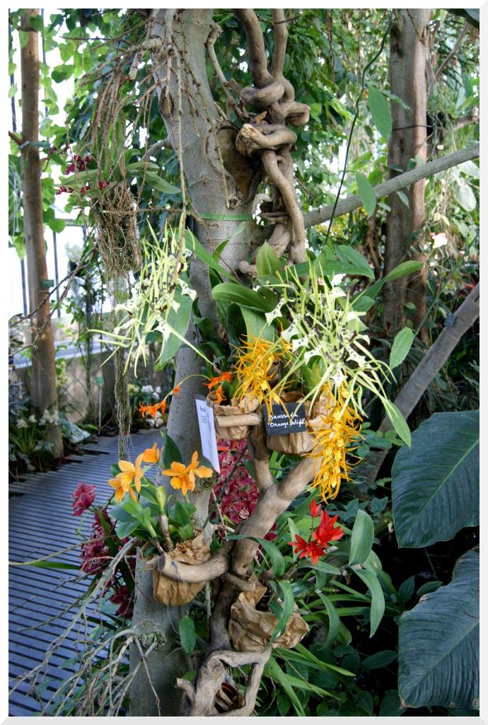 orchidées jardin des plantes paris