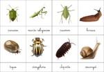 nomenclatures petites bêtes