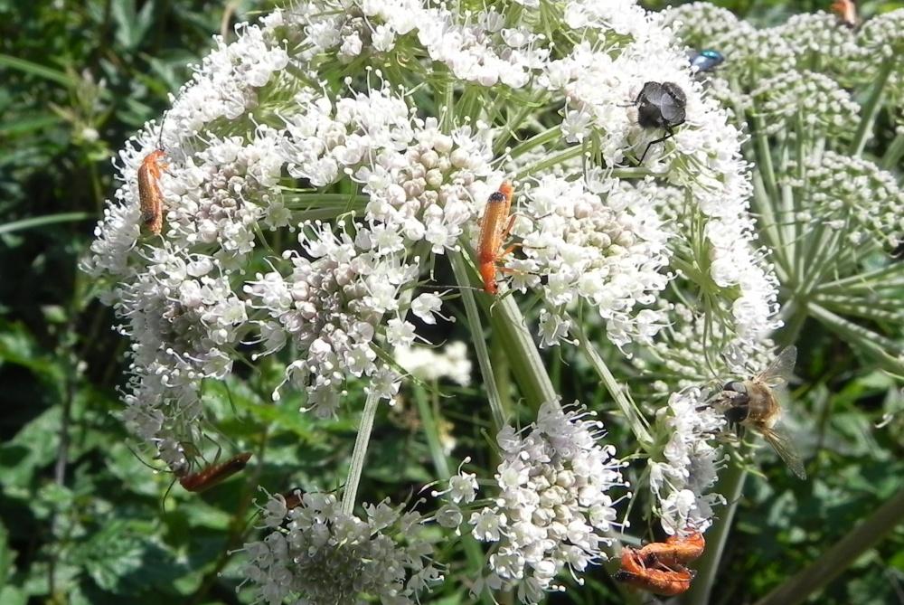 les insectes du jour ! sur une fleur