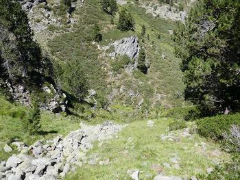 Tout en bas, le lit du ruisseau des Carboneres