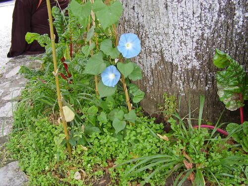 Défi n° 213 : une fleur bleue