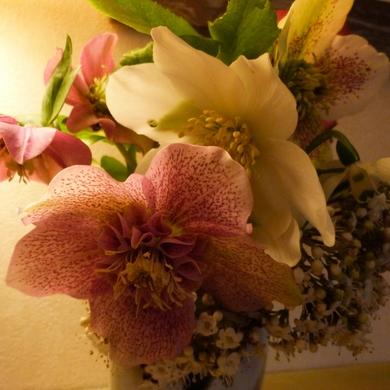 Petit bouquet de janvier...