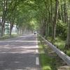 Les beaux alignements de platanes vers St Pierre d'Albigny