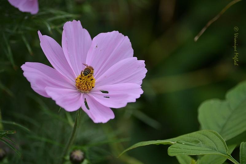 Parc floral de Paris :  Les fleurs de l'automne