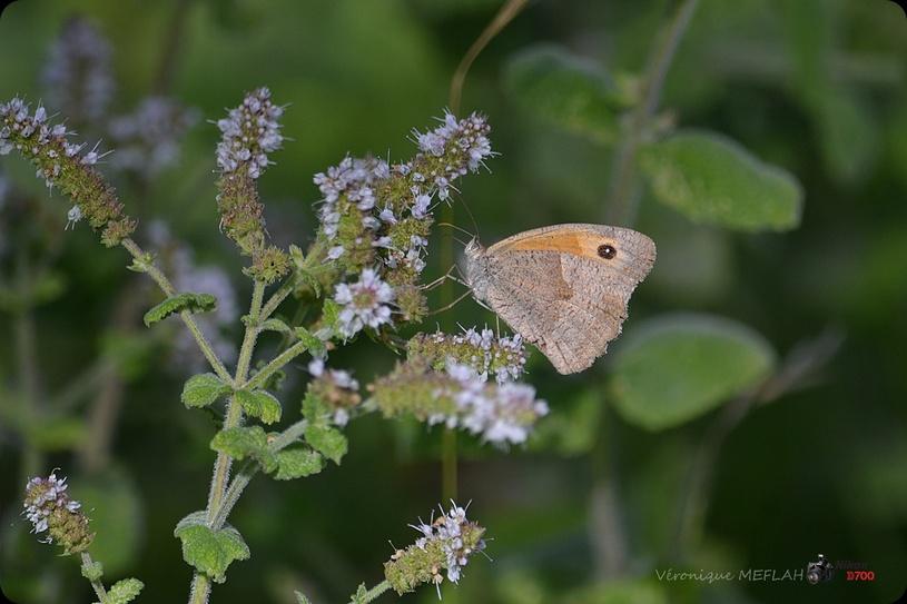 Rambouillet : Octobre : Les derniers papillons