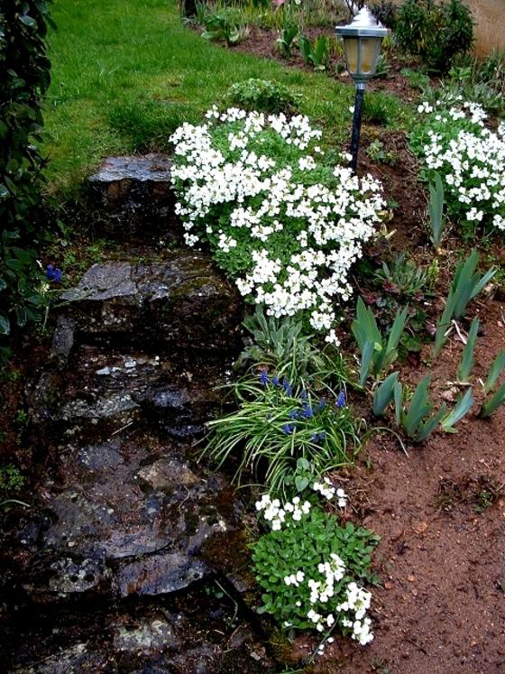 Avril,les mélanges de couleur au jardin......