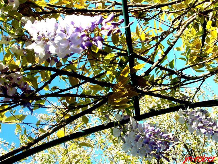 Jardin d'Avril 2014, Un mois de Mai avec de l'avance.