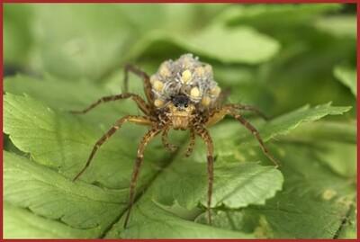 Les Insectes (3)