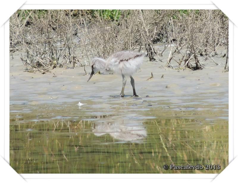 Grands et petits à la réserve ornitho du Teich - 9/15