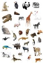 les animaux d'Asie