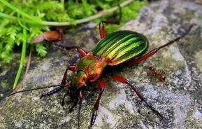 Reconnaître les insectes au jardin