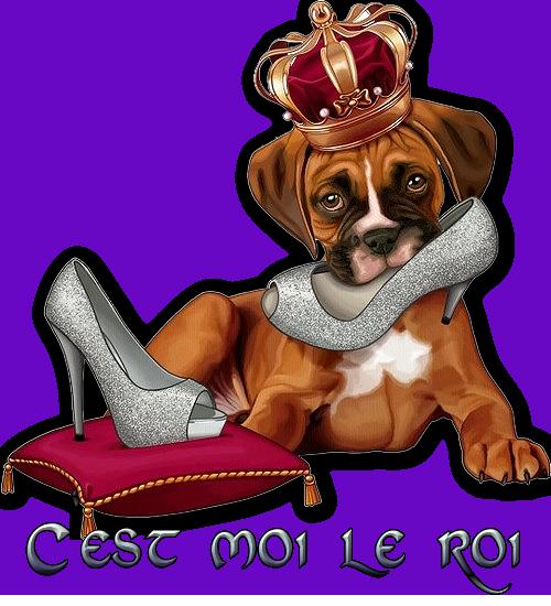 Le petit roi de Sellena