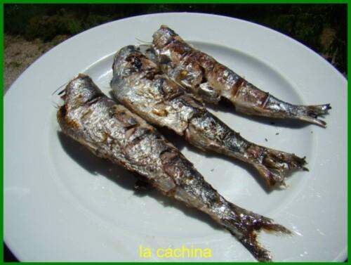 sardines--5-.JPG