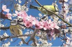 Le printemps arrive !