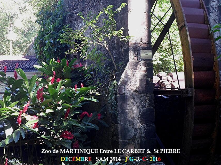 ZOO de MARTINIQUE 4/5 - 9/15  LE CARBET  972      D  16/11/2017
