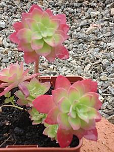jardin mars 201001