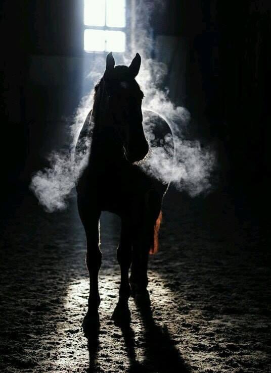 Photo de ∞ Le souffle du cheval est l'air du paradis ∞.