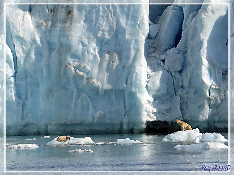 Retour vers l'ourse et son gros ourson - Croker Bay - Devon Island - Nunavut - Canada