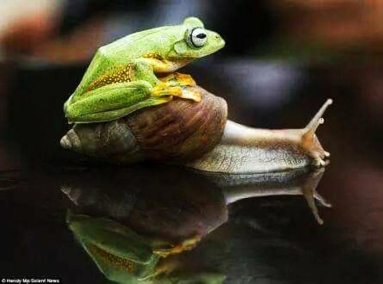 """Résultat de recherche d'images pour """"photos amusantes escargots"""""""