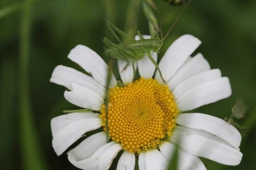 Fleurs sauvages pour vous dire que c'est bientôt l'été...