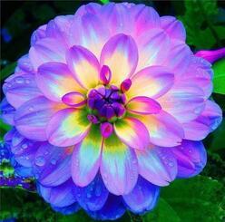 """Happie's on Twitter: """"Dahlia, une des plus belles fleurs au monde.  http://t.co/KgVmfIdakV"""""""