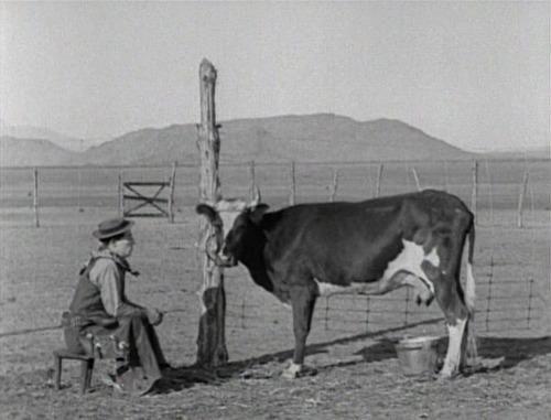 06 - Des vaches au cinéma