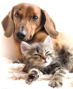 Quand les animaux viennent en aide aux humains ...